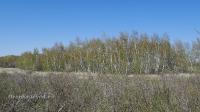 Карагачский ольхово-березовый лес. Май 2018 года
