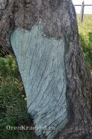 Реликтовая лиственница