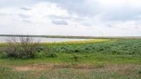 Озеро Копа. Июнь 2021 года