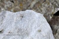 Большая Белая Шишка (Осетинская Шишка)
