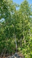 Гайская Березовая Роща и озеро Купоросное. Июнь 2021 года
