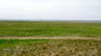 Курганы у дороги Гай-Оренбург