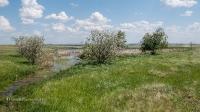 Яшмовый родник близ посёлка Калиновка