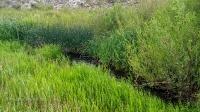 Река Кумыс-Тобе (Кумыс-Тюбе, Кумустобе, Кумус-Тюбе). Июнь 2021 года