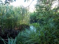 Река Туембетка
