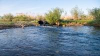 Река Камсак (Камсакты). Май 2021 года