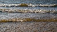 Карагашский пруд (пруд на ручье Карагашка)