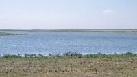 Озеро Будамша. Июнь 2021 года