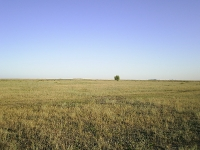 Степь у села Покровка